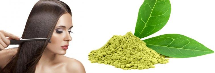 экстракт зеленого чая для волос свойства применение
