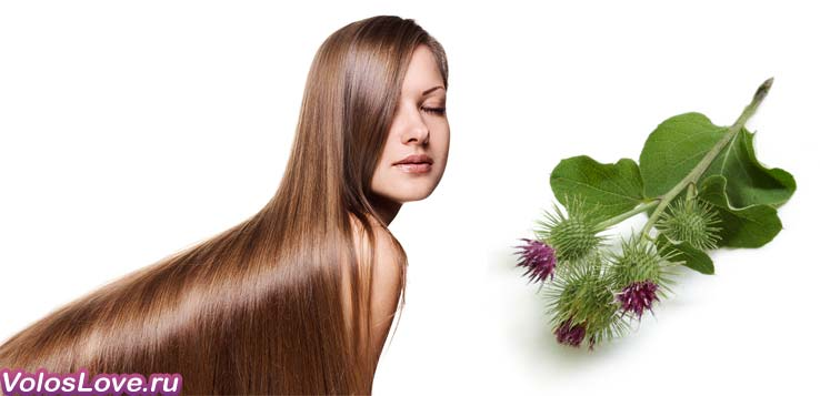 Лопух рецепт от выпадения волос