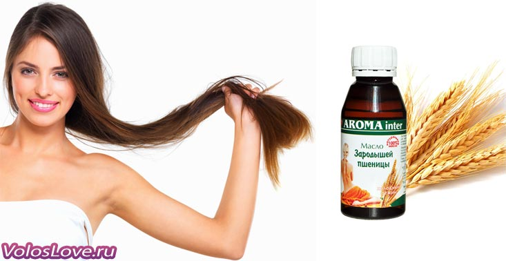 Масло зародышей пшеницы для волос: маски и отзывы