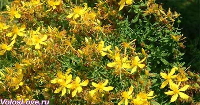Зеленые травы на грядках и подоконнике: уход и выращивание