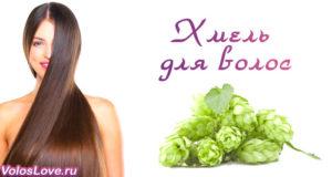 Шишки хмеля для роста и укрепления волос в домашних условиях