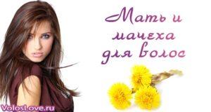 Мать и мачеха для волос — маски и ополаскивание отваром