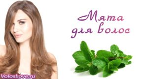 Перечная мята для волос —  масло, отвар, ополаскиватель и маски
