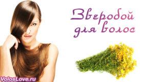 Польза и применение зверобоя для волос — рецепты отвара и масок
