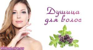 Применение душицы для волос — масло, рецепты отвара и настойки