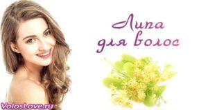 Применение цветков липы для волос — рецепты отвара и настойки