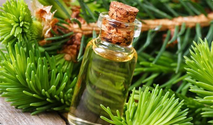 Маска для волос маслом пихты рецепты отзывы
