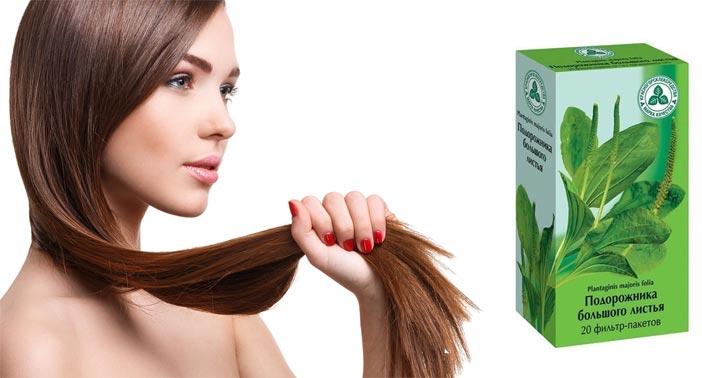 Маски для волос с подорожником рецепты свойства