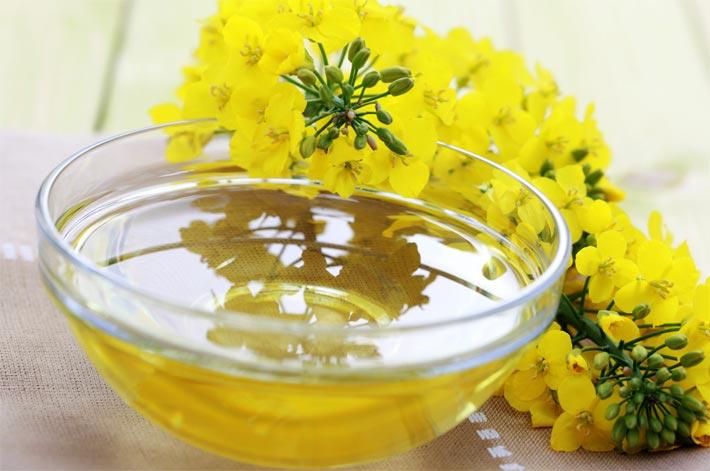 рыжиковое масло полезные свойства и применение